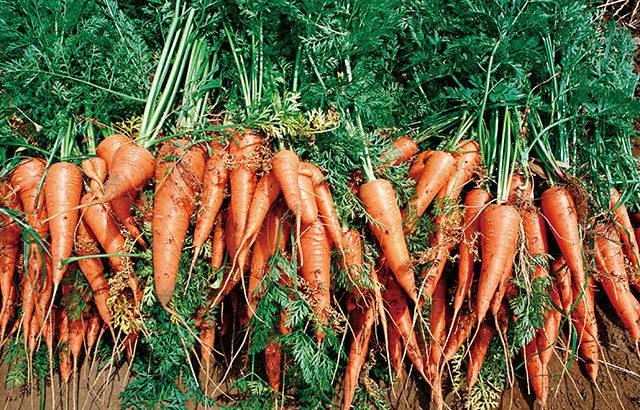 持続可能な農業のために頑張っている農家さんを応援したい